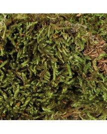 TRIXIE Terárijný mach 200 g