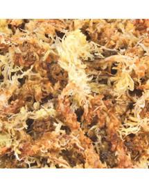 TRIXIE Podstielka rašeliníkový mach (sphagnum) 100 g