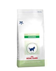ROYAL CANIN Cat Pediatric predĺženej dojčenskej 0.4 kg