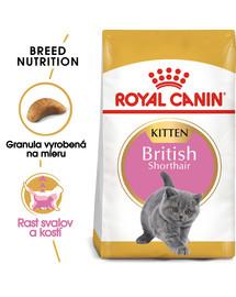 ROYAL CANIN British Shorthair Kitten 200g granule pre britské krátkosrsté mačiatka
