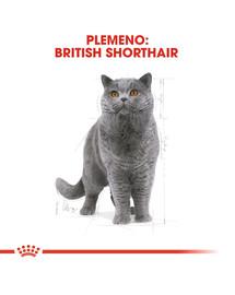 ROYAL CANIN British Shorthair Adult 2kg granule pre britské krátkosrsté mačky