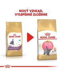 ROYAL CANIN British Shorthair Kitten 10kg granule pre britské krátkosrsté mačiatka