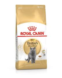 ROYAL CANIN British Shorthair Adult 10kg granule pre britské krátkosrsté mačky