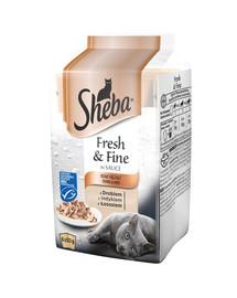 SHEBA Fresh & Fine krmivo pre mačky v omáčke 6 x 50 g