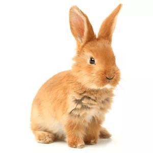 Klietky pre králiky