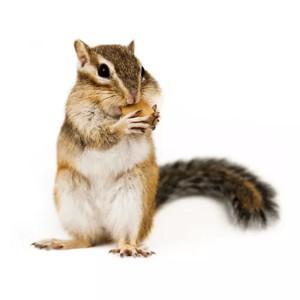 Klietky pre veveričky