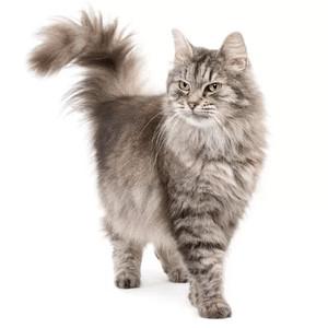 Krmivo pre mačky podľa špecifických potrieb