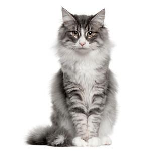 Krmivo pre mačky podľa značky