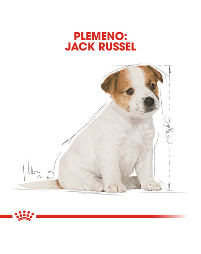ROYAL CANIN Jack Russell Puppy 3 kg granule pre šteňa jack russell teriéra